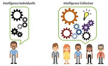 intelligence individuelle intelligence collective